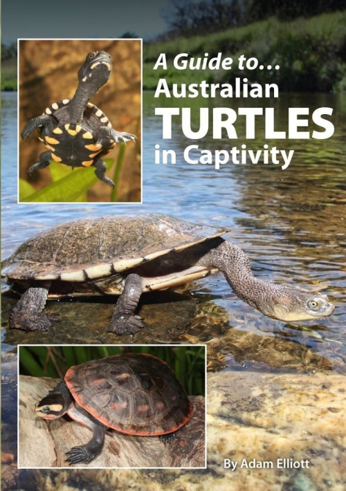 Guide to Turtles