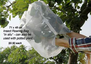 Large Insect Rearing Bag