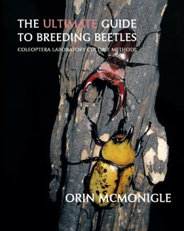 Breeding Beetles