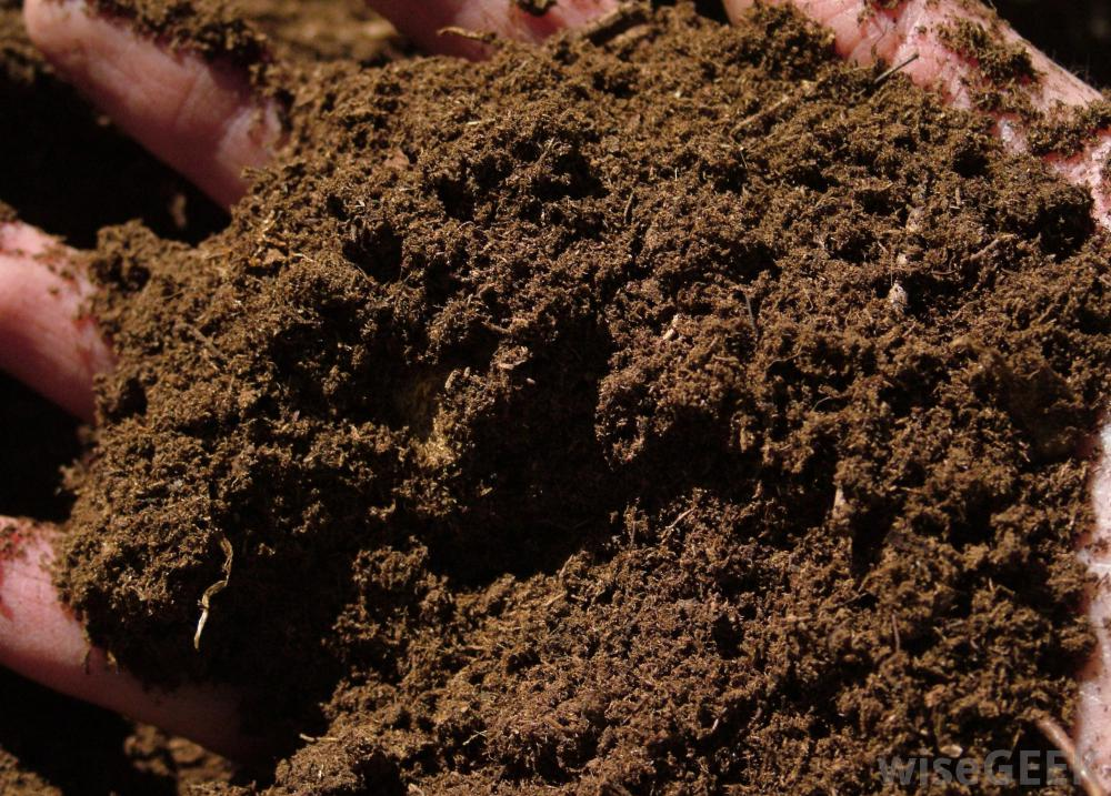 Peat moss 2 litre geckodan danny brown for Organic soil definition