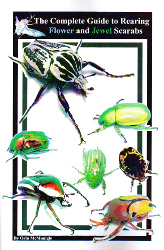 Flower Beetles