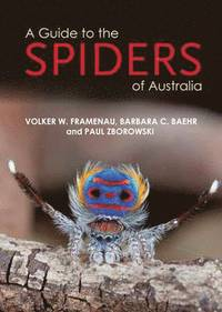 A Guide to spiders